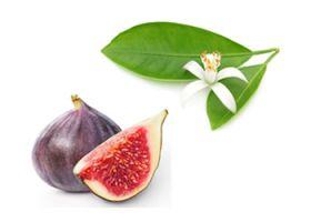 Limeflower and Fig Handmade Soap